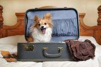 [Fugindo do Verão] Como trouxemos nossos animais para a Irlanda