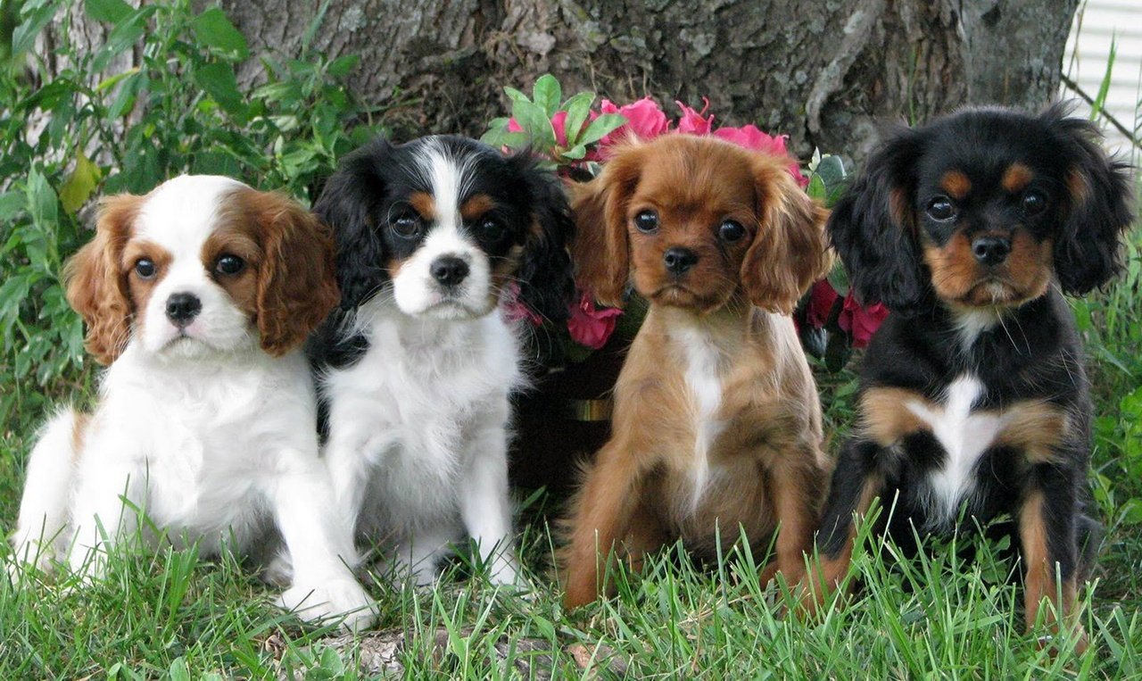 20 Cachorros de raças cruzadas que você irá se apaixonar