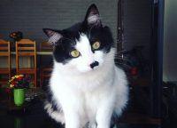[Instagram da Semana] As peripécias do gato revolucionário Jon Fofo