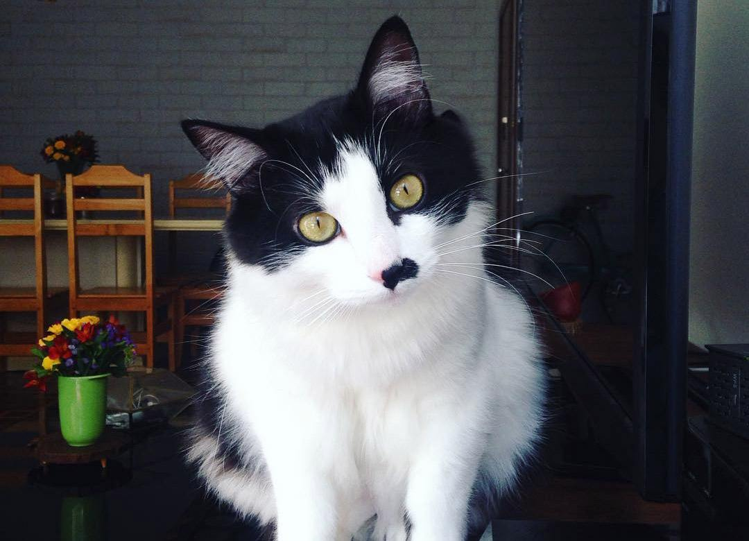 gato Jon Fofo 2