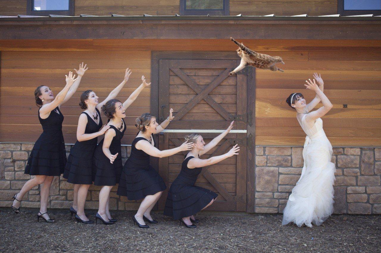 Noivas arremessando gatos ao invés do tradicional buquê de flores