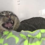 Pequenos gatinhos que curaram a agressividade de um gato selvagem 2