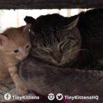 Pequenos gatinhos que curaram a agressividade de um gato selvagem 3