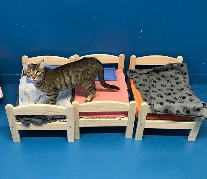 Ikea doa camas de bonecas para abrigo de gatinhos
