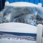 Ikea doa camas de bonecas para abrigo de gatinhos 2