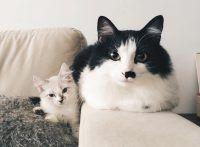 Instagram da Semana: Arya Fofa, a irmã do gato revolucionário Jon Fofo.