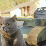 E se os gatos dominassem o mundo