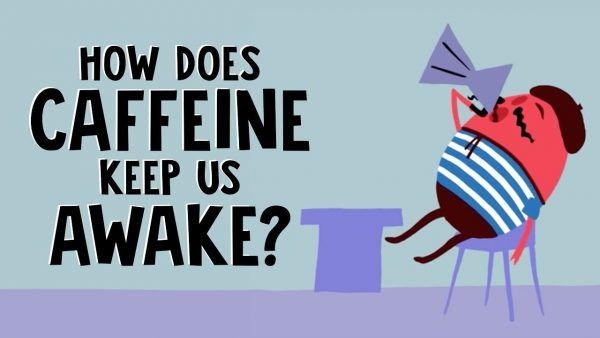 Como a cafeina nos mantém acordados 2