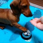 Cadelinha aprendendo a pedir comida