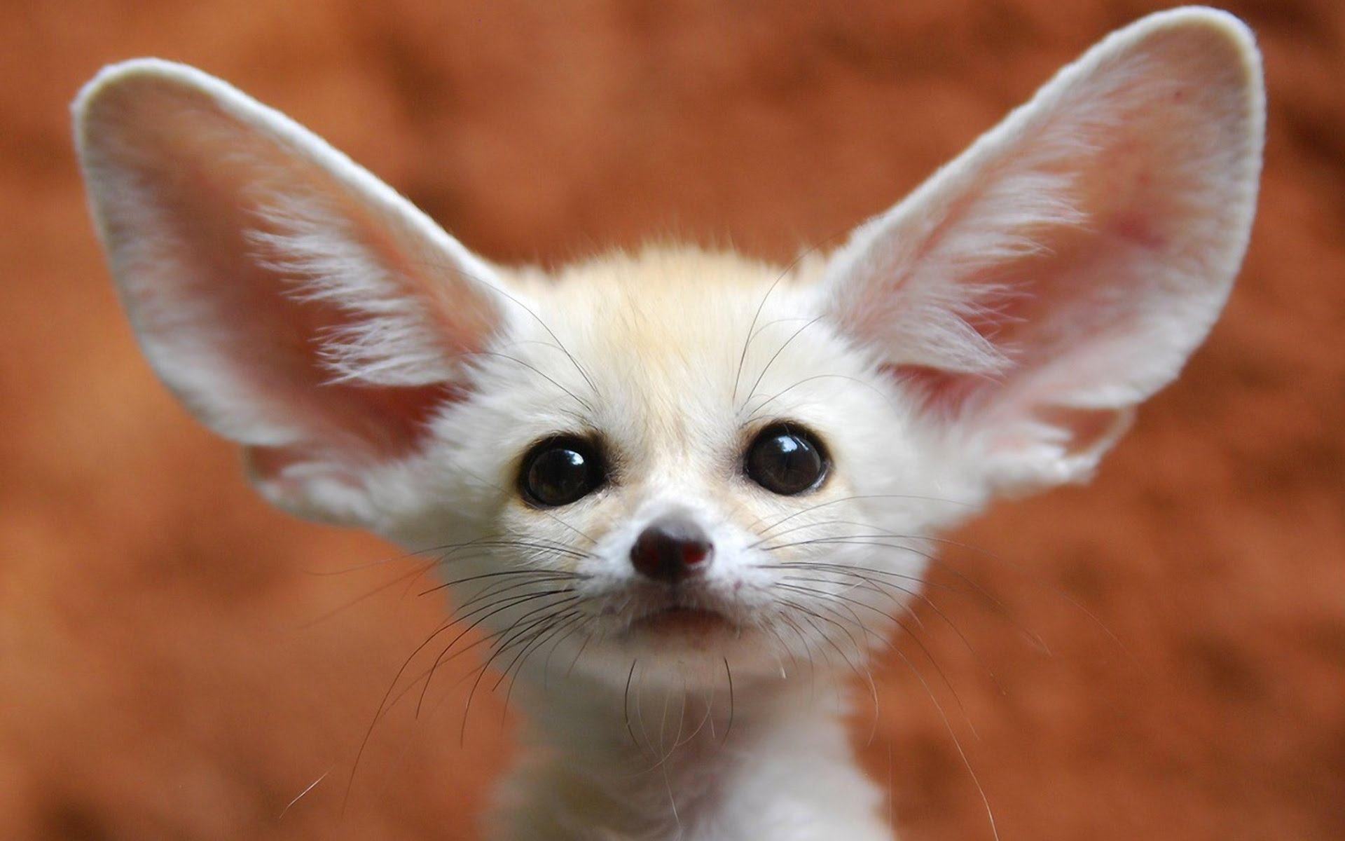 5 animais mais nenês que você vai ver hoje