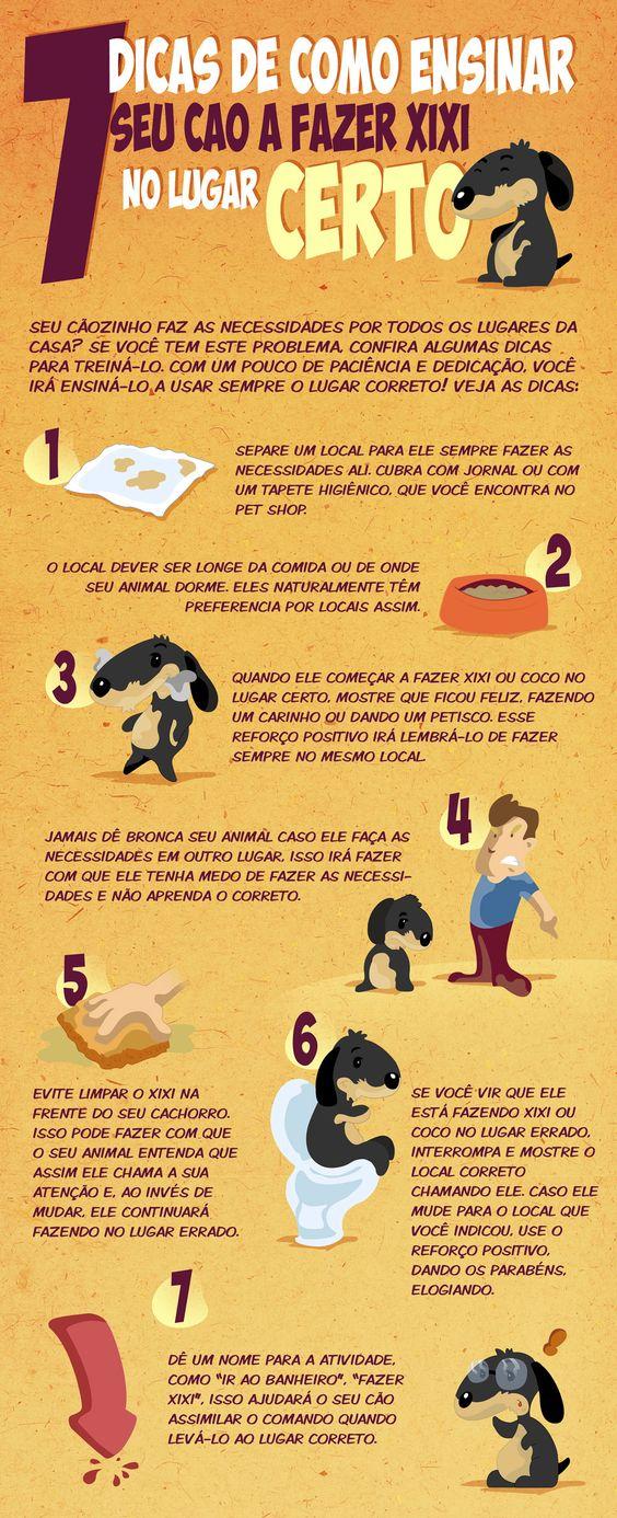 Como ensinar o cachorro a fazer xixi e cocô no lugar certo