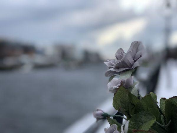 5 flor ponte sol neve