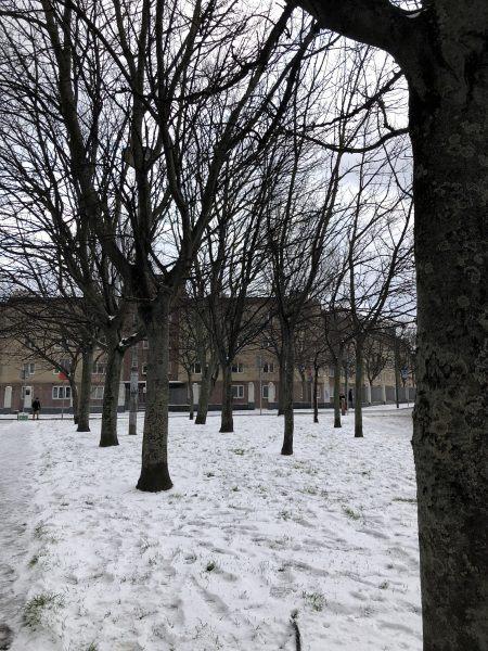 8 jardim Neve
