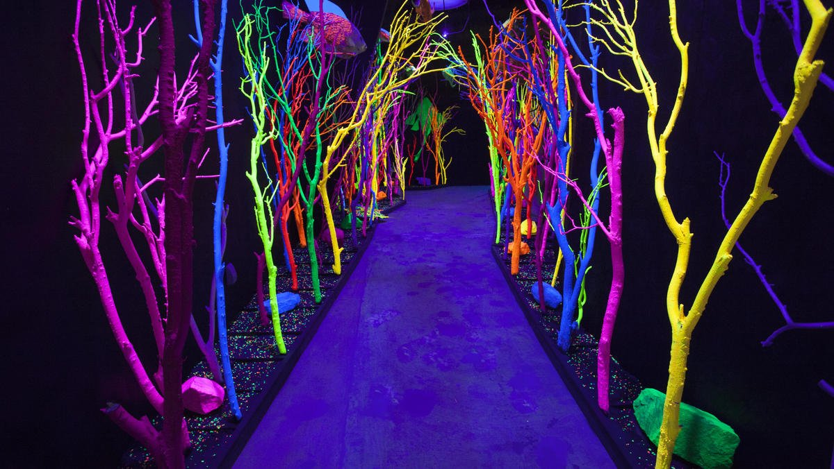 Meow Wolf Experience 2