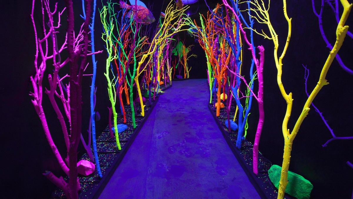 Psicodelia, portais mágicos, passagens secretas e florestas encantadas no mundo de Meow Wolf