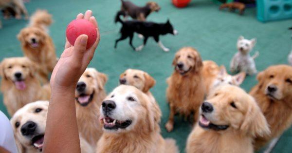 creche de cachorros