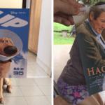 posters de filmes com cachorros e gatinhos