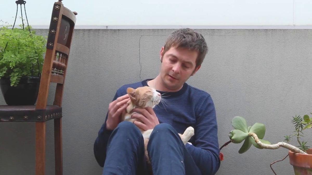 Construindo uma torre de caixas para um gato