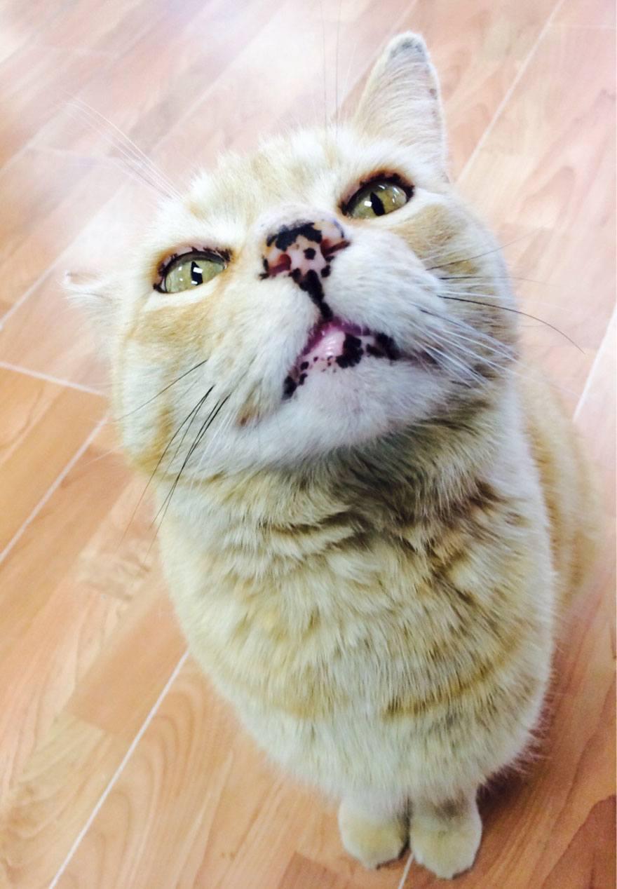Focinhos de gatos para animar seu dia 11