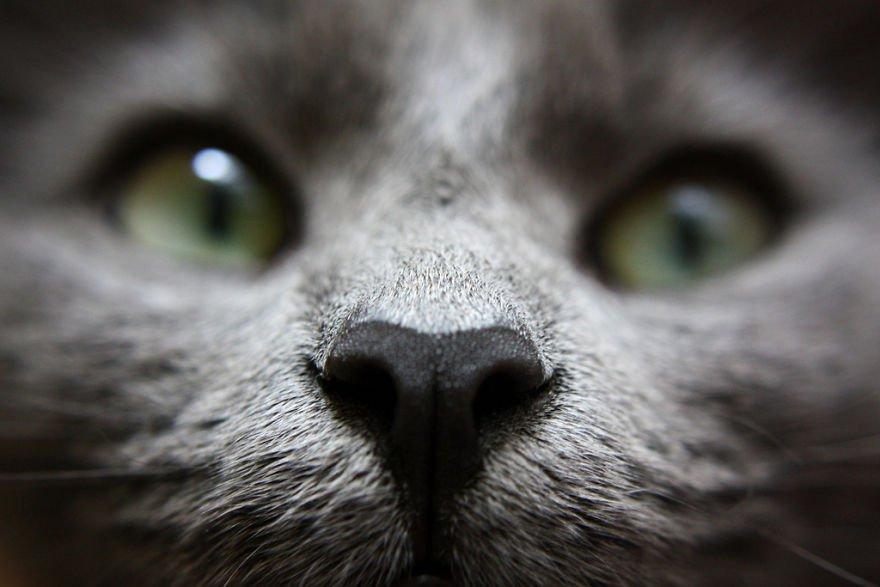 Focinhos de gatos para animar seu dia 14