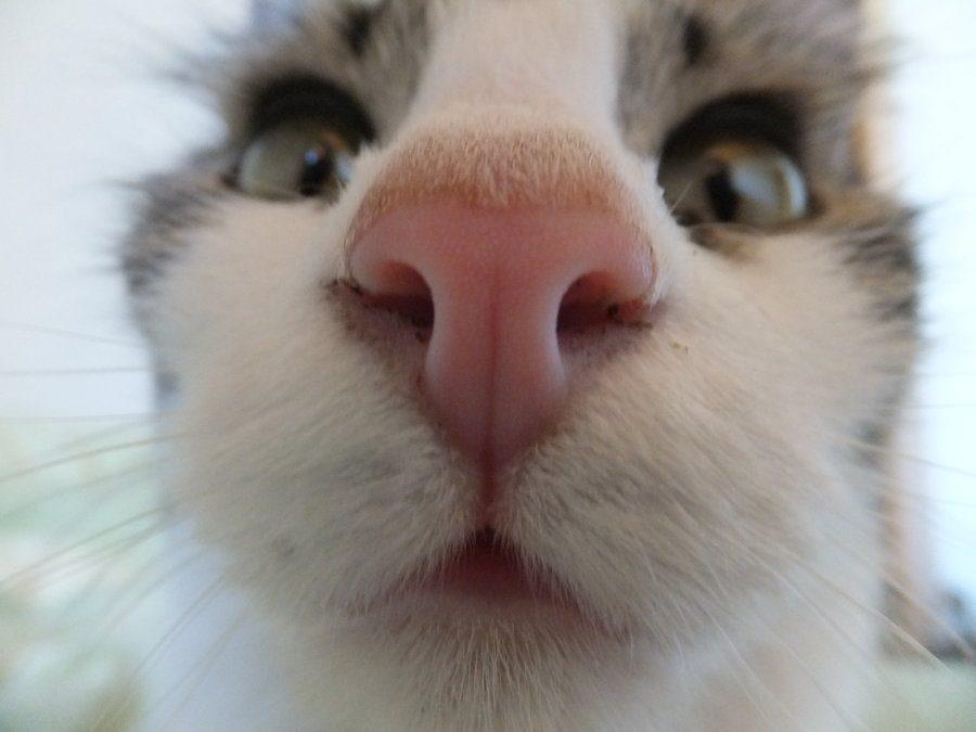 Focinhos de gatos para animar seu dia 15
