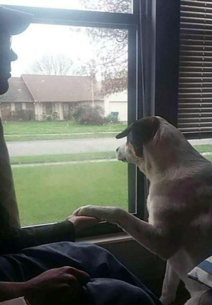 """""""Meu cachorro é treinado para responder à ansiedade. Quando ele sente sua tristeza ele faz você segurar a pata dele."""