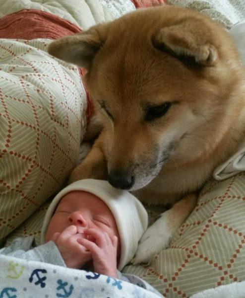 Cão apaixonado pela irmã recém nascida