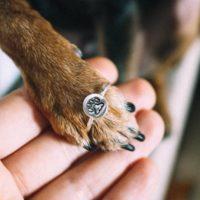 Cães dando ao mundo pequenas demonstrações de amor