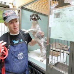 Cabeleireiro se oferece para mudar o visual de cães abandonados para ajudá-los a serem adotados