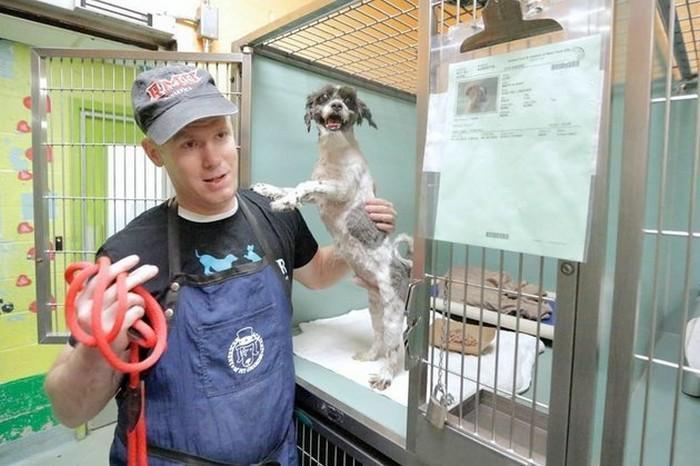 Cabeleireiro se oferece para mudar o visual de caes abandonados para ajuda los a serem adotados 1