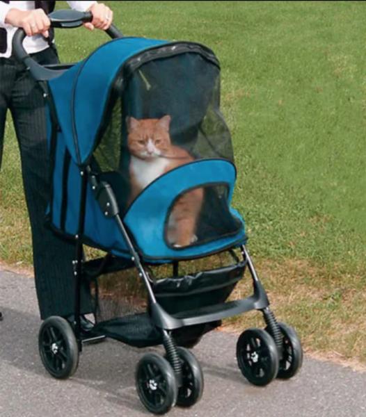 o mundo se adapta aos gatos 13