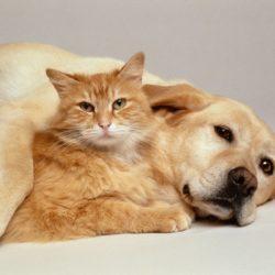 Diferença entre Cães e Gatos