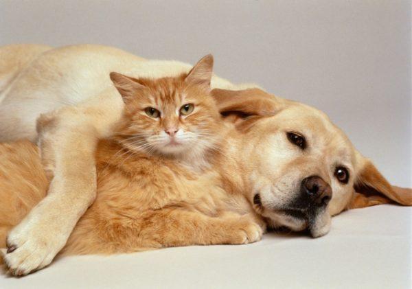 Diferenca entre Caes e Gatos