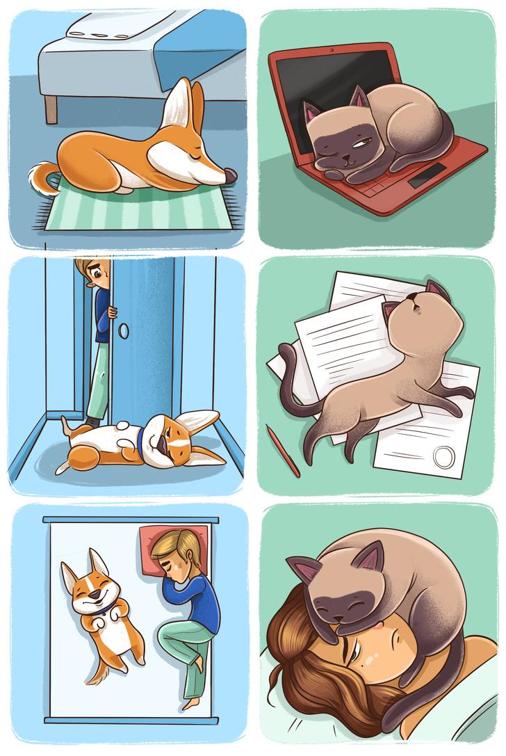 Diferenca entre Caes e Gatos 7