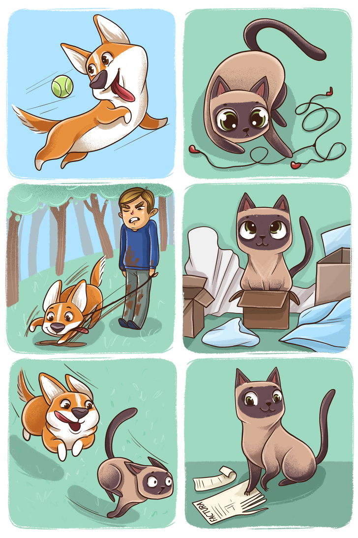 Diferenca entre Caes e Gatos 8