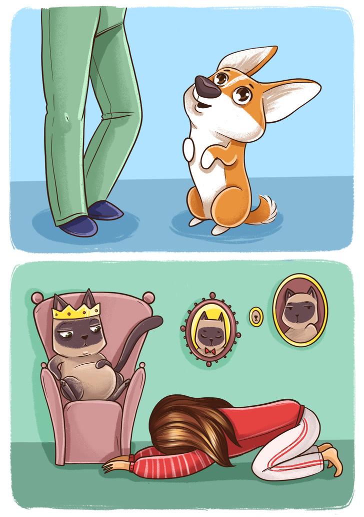 Diferenca entre Caes e Gatos 9