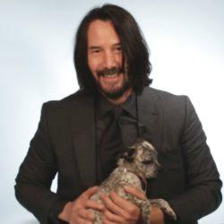 Keanu Reeves responde perguntas enquanto é atacado por puppies