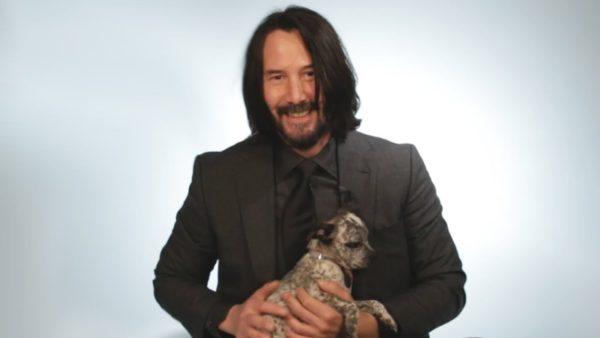 Keanu Reeves responde perguntas enquanto e atacado por puppies 2
