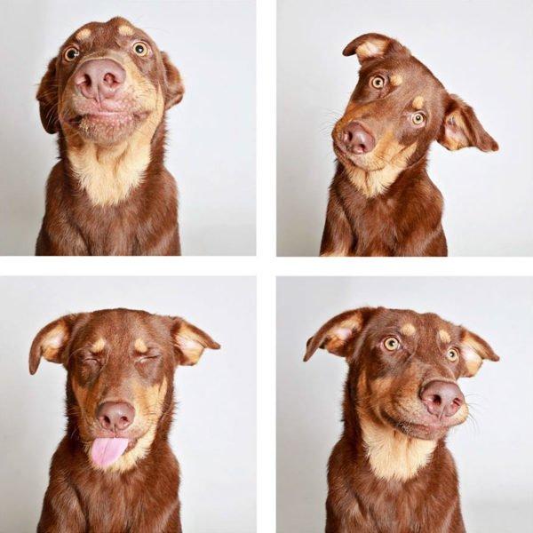 Lindo ensaio fotográfico para cães ajudam na adoção dos animais