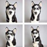 Lindo ensaio fotográfico para cães ajudam na adoção dos animais 3