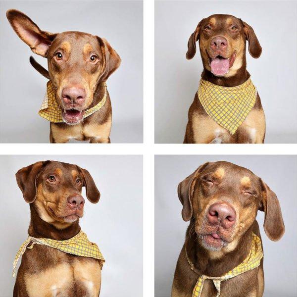 Lindo ensaio Lindo ensaio fotográfico para cães ajudam na adoção dos animais para cães ajudam na adoção dos animais 4
