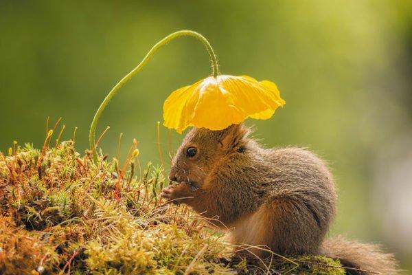Fotógrafo captura esquilos e resultados são incríveis