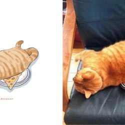Artista ilustra memes de gato: confira algumas situações inusitadas e divertidas