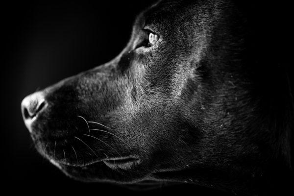 Em projeto para adoção cães e gatos pretos posam para fotos 23
