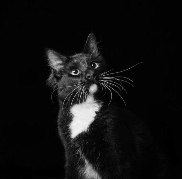 Em projeto para adoção, cães e gatos pretos posam para fotos