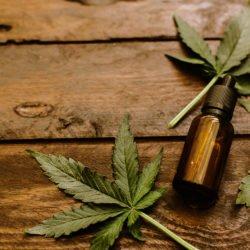 Maconha medicinal: Anvisa autoriza venda de remédios à base de Cannabis