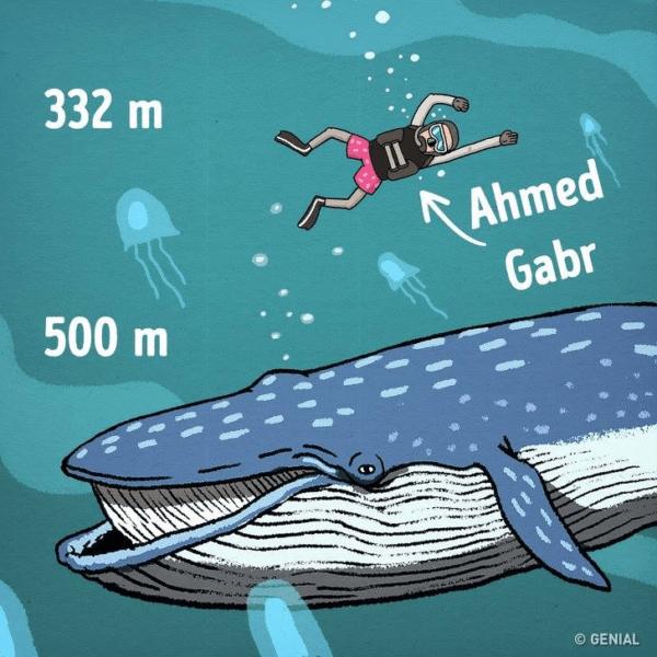 Profundidade do oceano desvende alguns mistérios e curiosidades