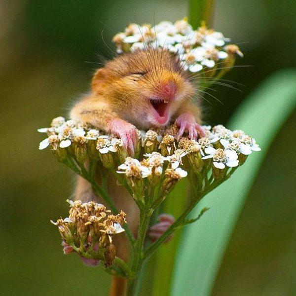 Você acha que os animais são felizes? Essas imagens provam que sim!