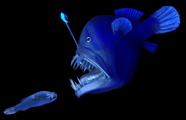 Peixe Diabo negro é registrado por cientistas e vídeo surpreende 2