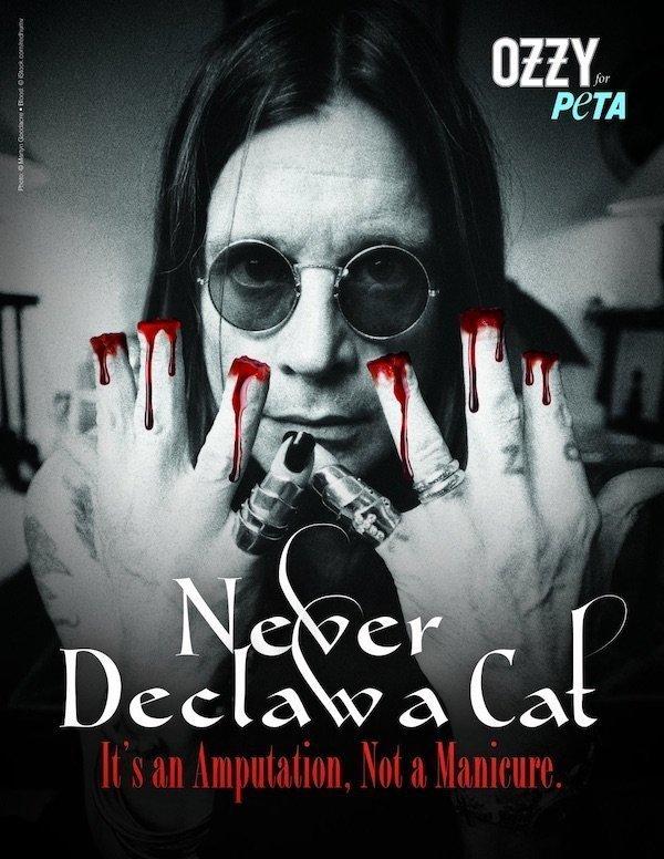 Ozzy Osbourne condena crueldade contra gatos em anúncio